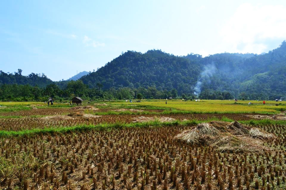 rizieres sumatra