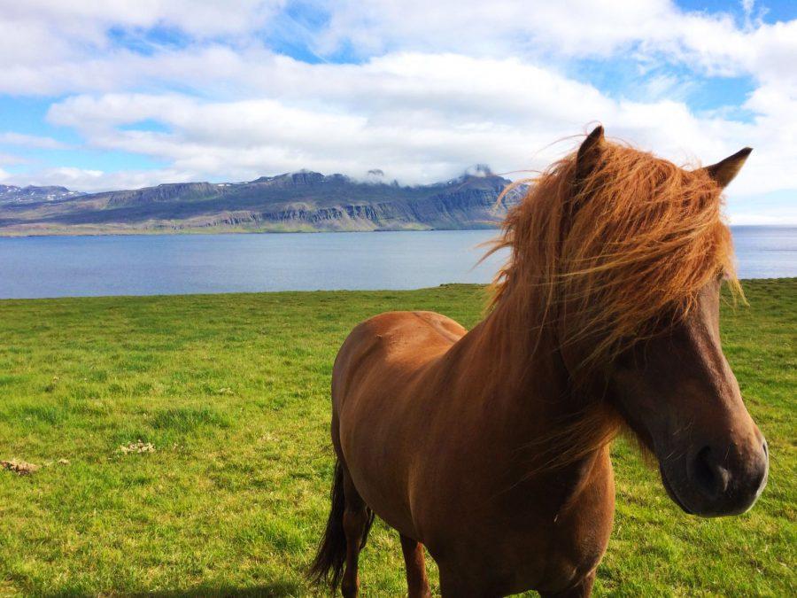 voyager petit budget islande