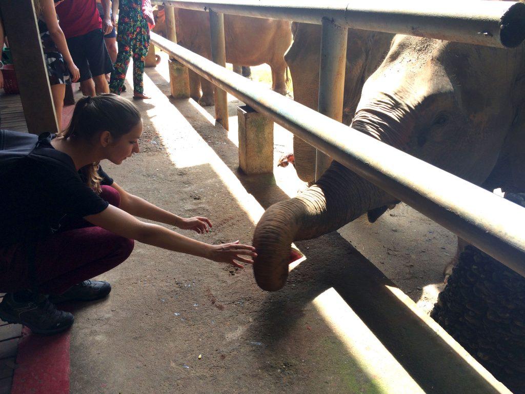chiang mai sanctuaire elephants
