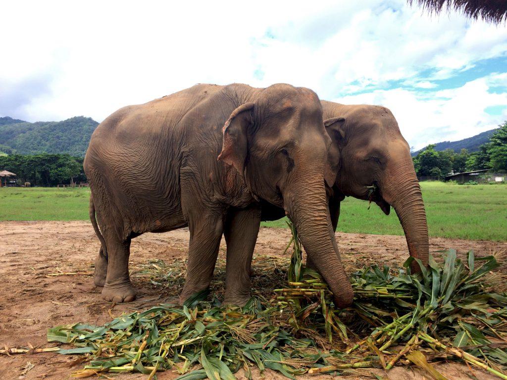 conservation elephants