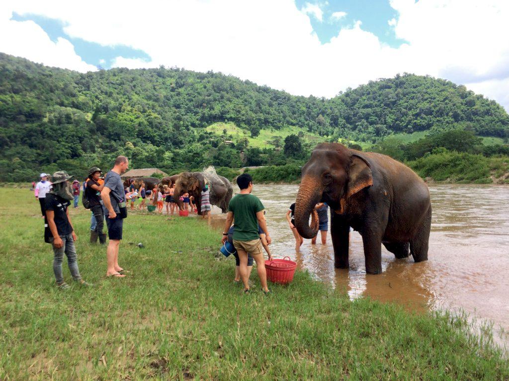 sanctuary elephants chiang mai
