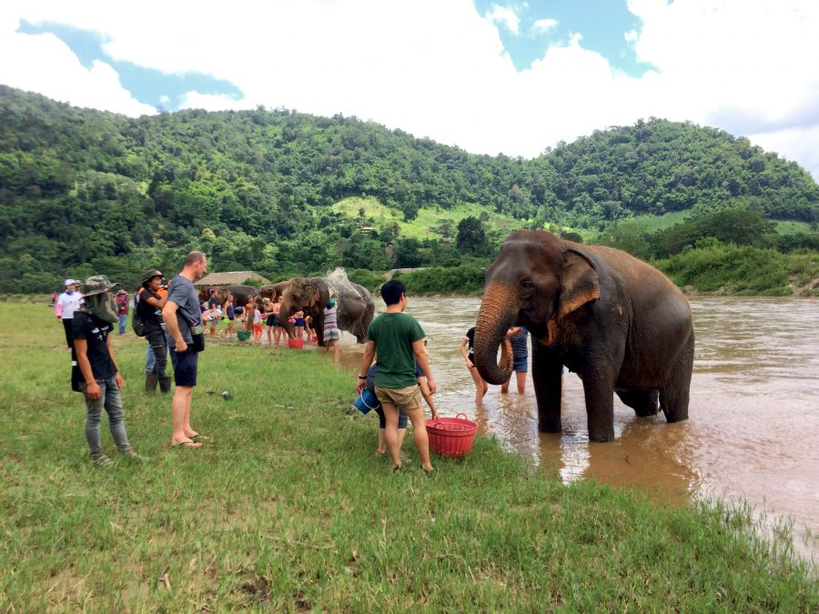 sanctuary elephants chiang mai