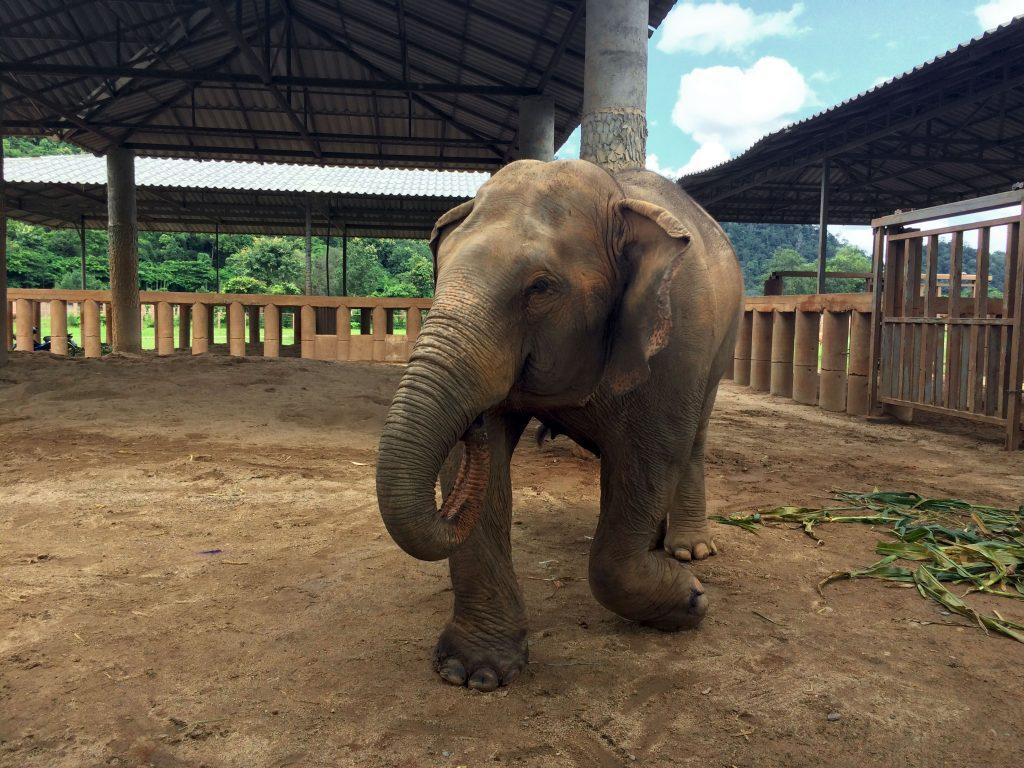 elephants malade