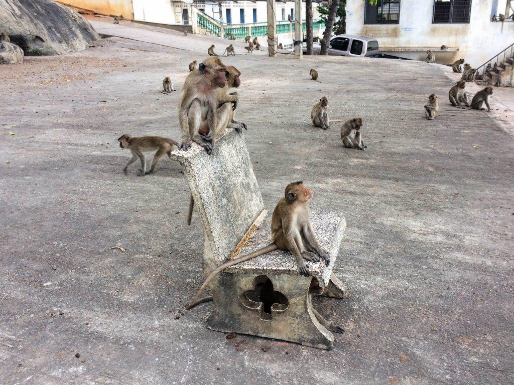 monkey hua hin