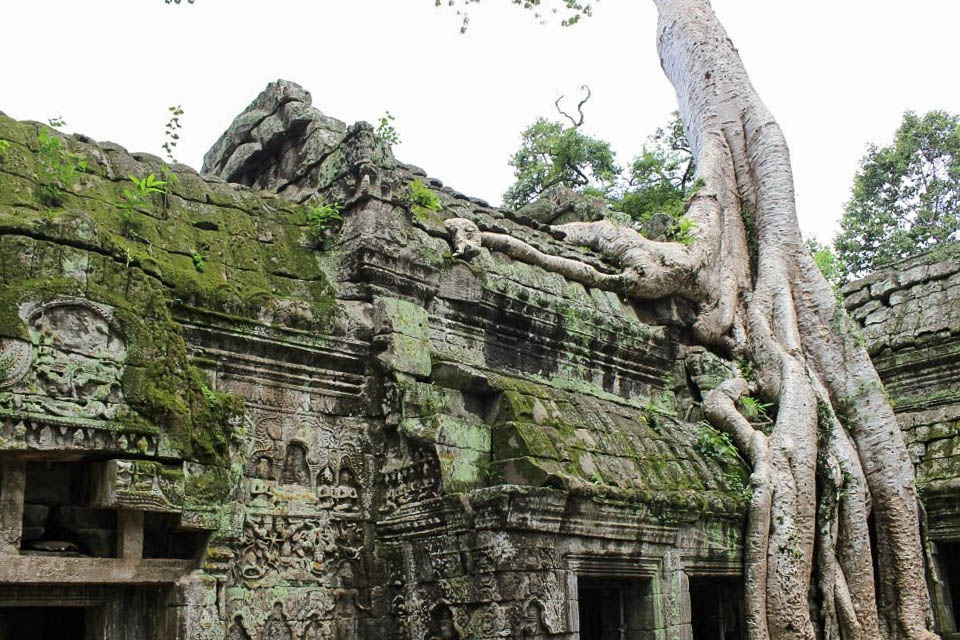 angkor temple ta phrom