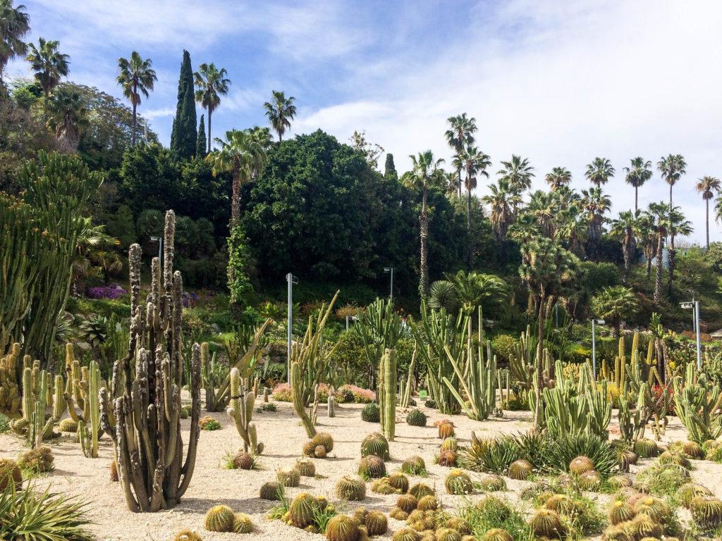 montjuic cactus