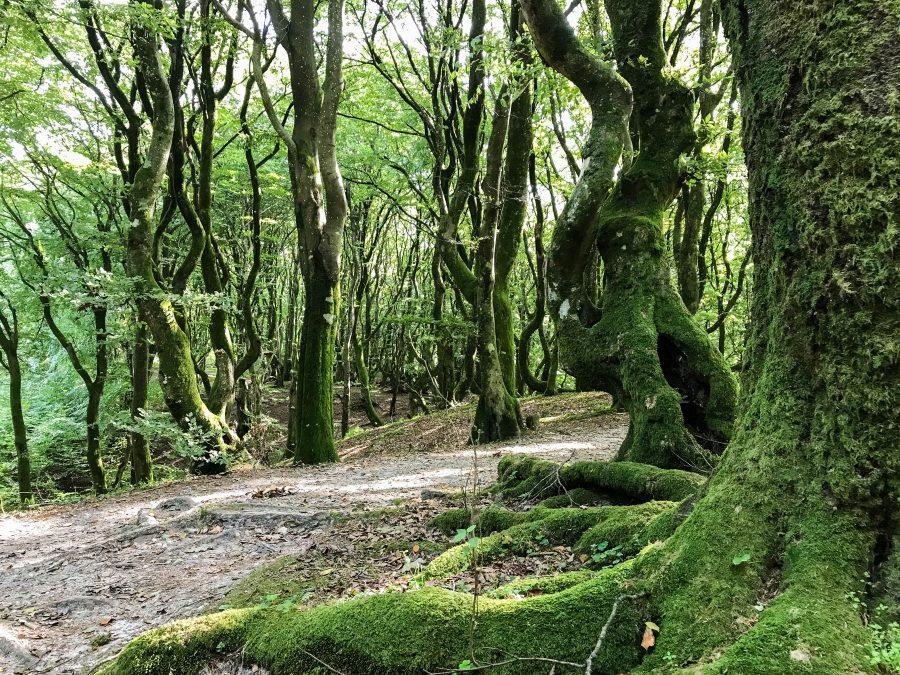 rold skov