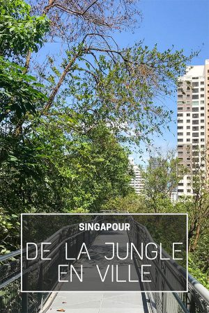 singapour jungle