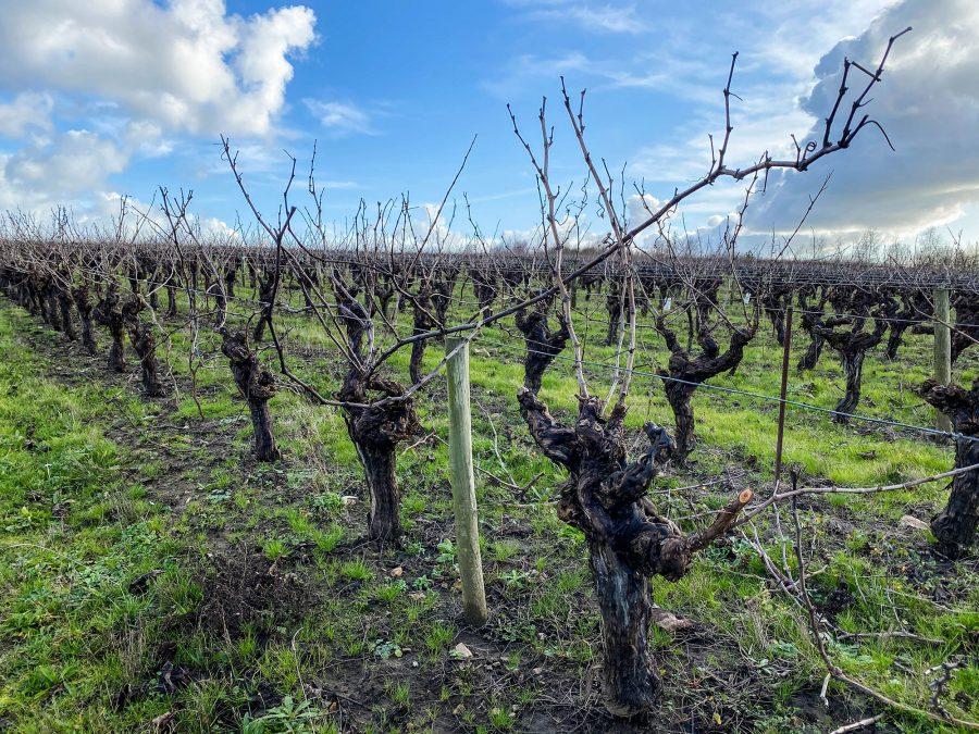 degustation vin pays nantais